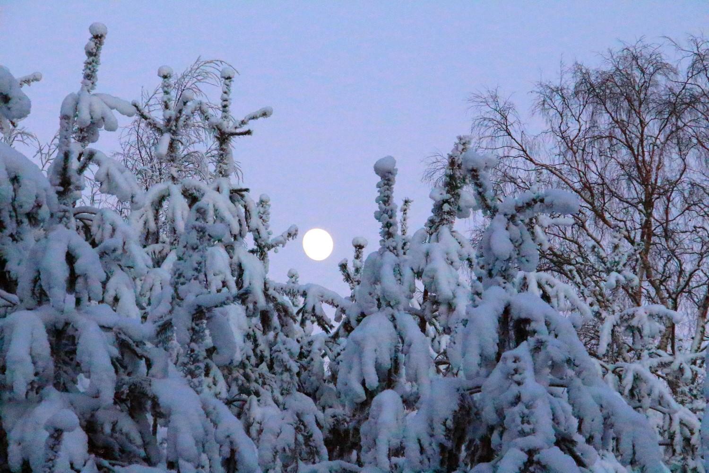 månen 24 januari