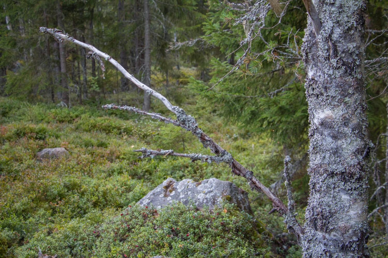 skogens vägvisare