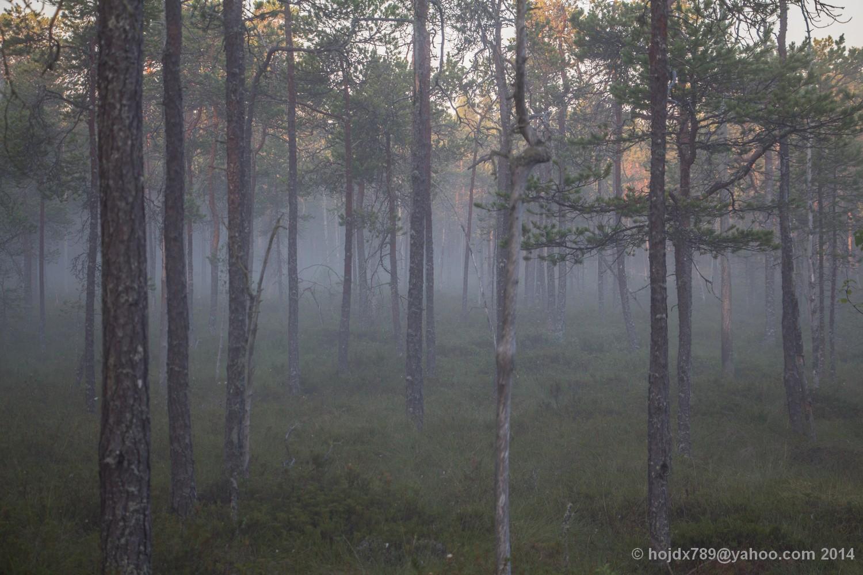 oxkangar natur 2014_7