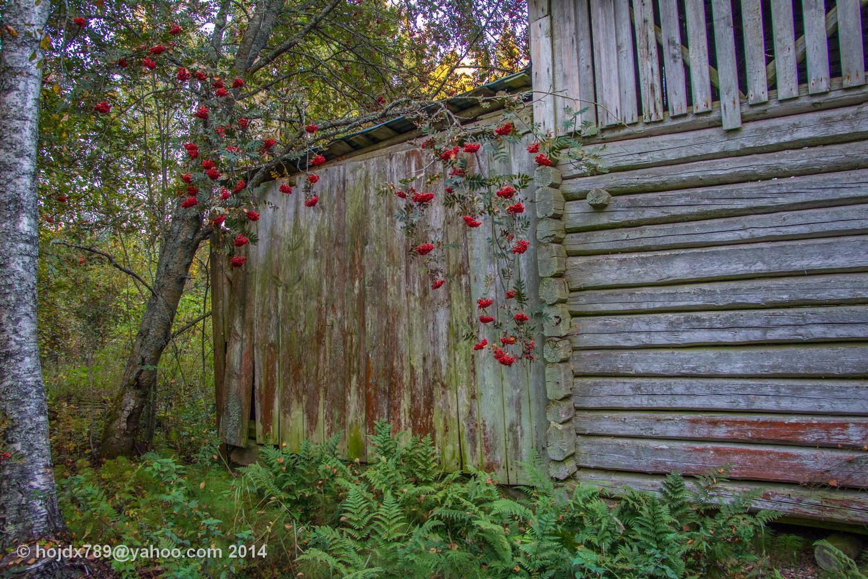 vägg och rönnbär
