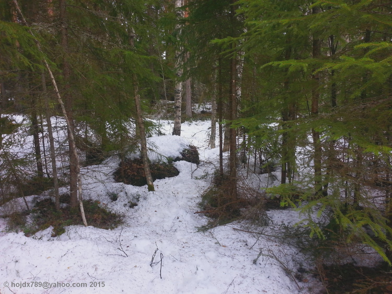 vinterskog_2
