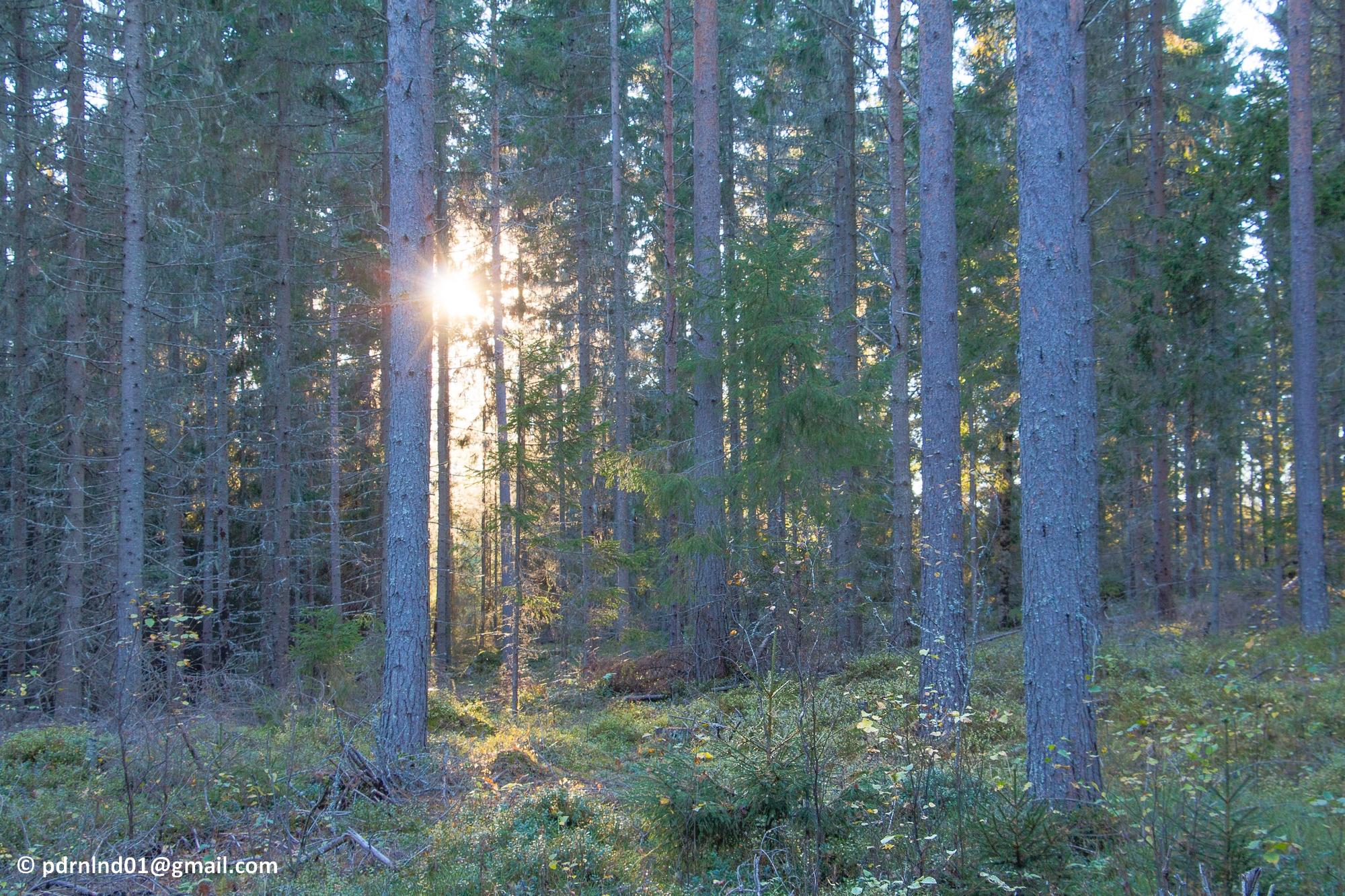 2016-10-02-029-2-skog