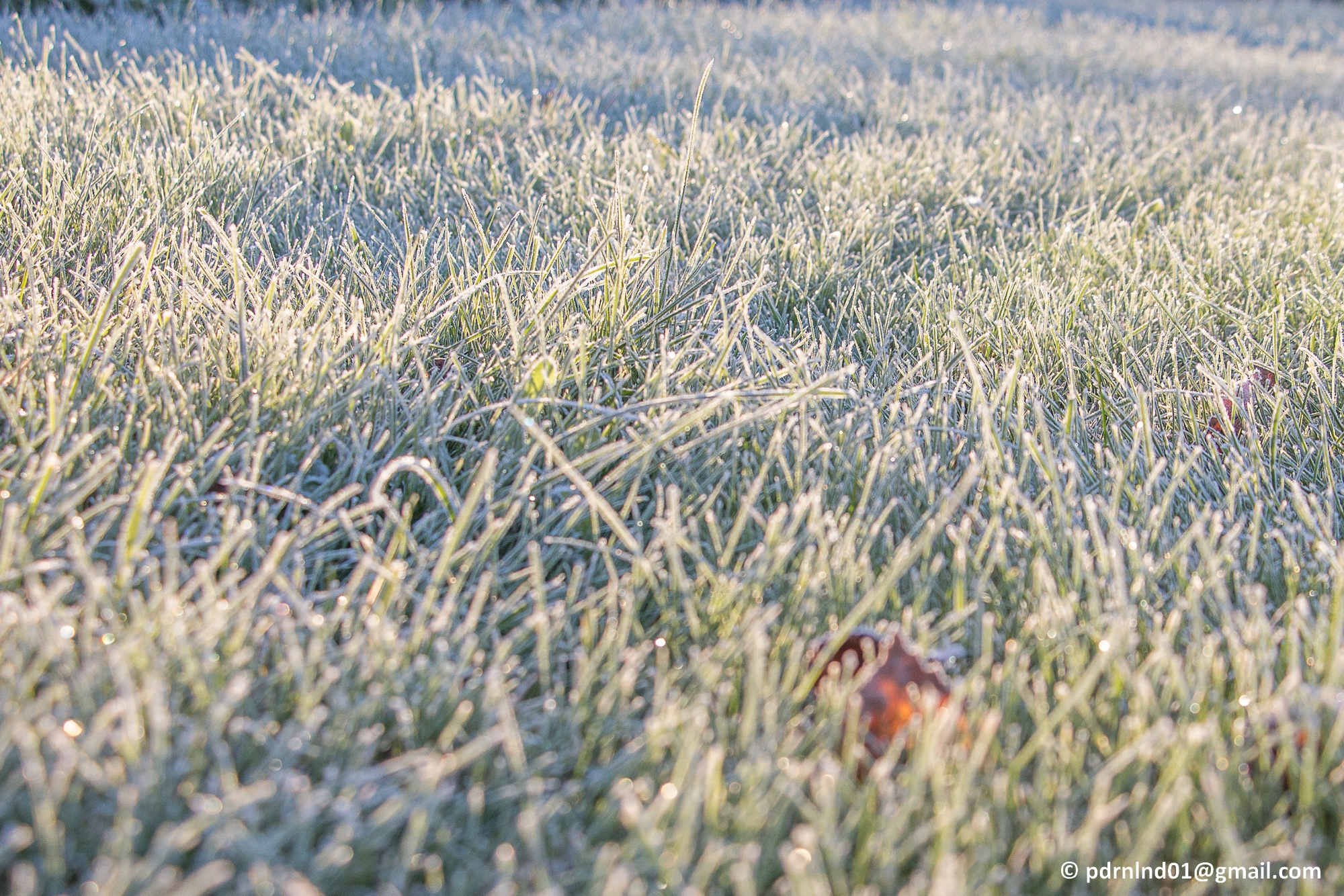 2016-10-05-002-frost