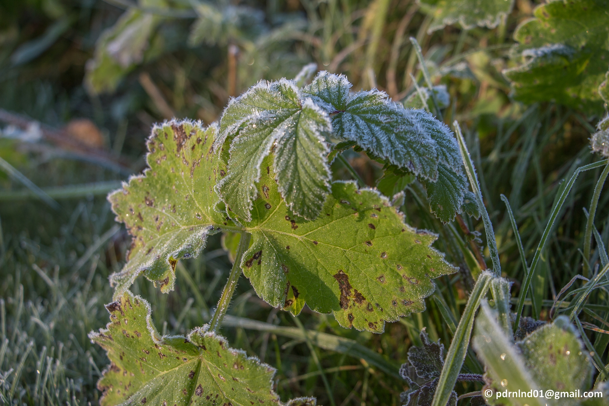 2016-10-05-003-frost