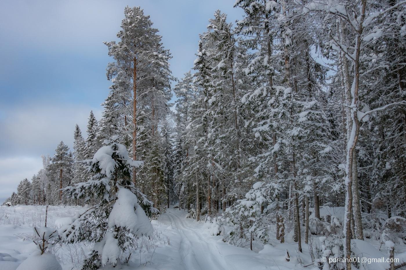 Spår i vinterskog