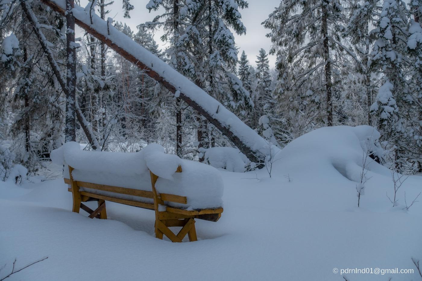 Snötäckt bänk i skogen