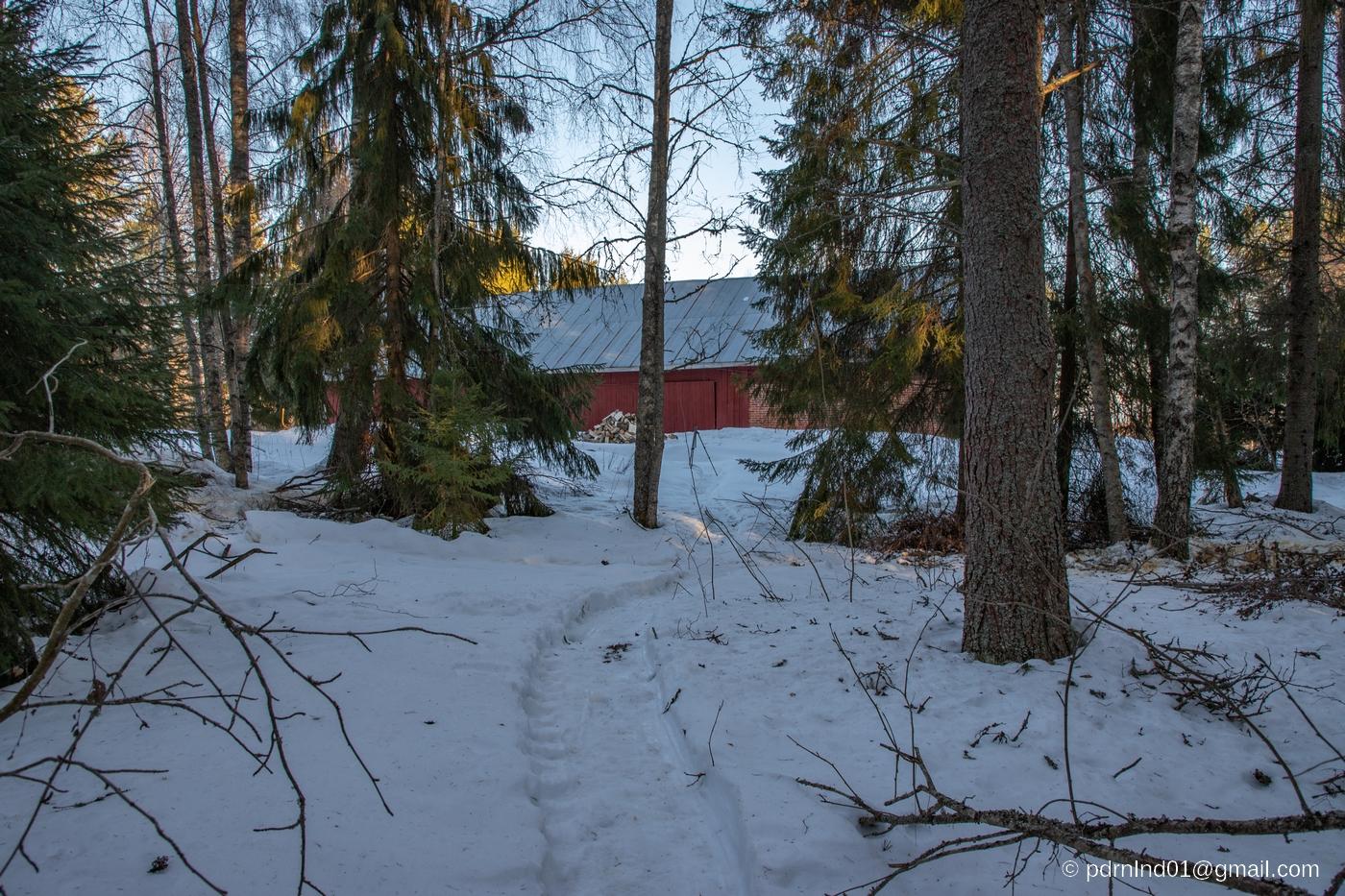 Skogsstig i snön